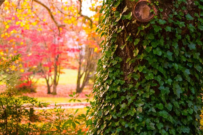 autumn foliage in mountains-007
