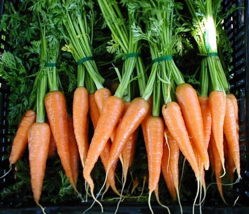 carrots - Healthy Snack Ideas