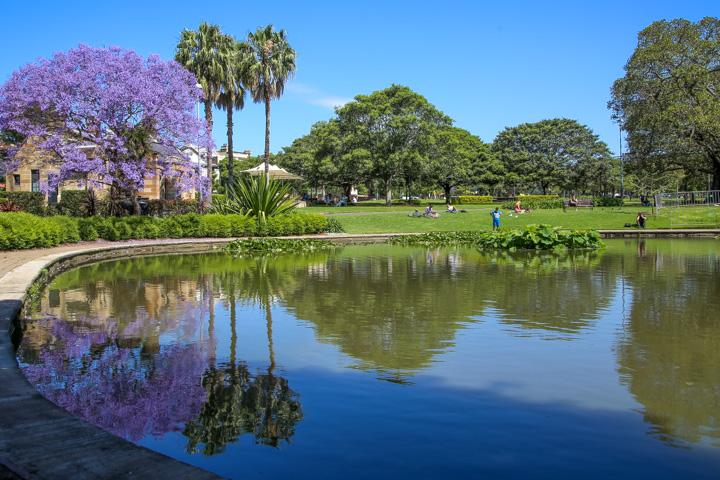 5 Best Jacaranda Spots In NSW