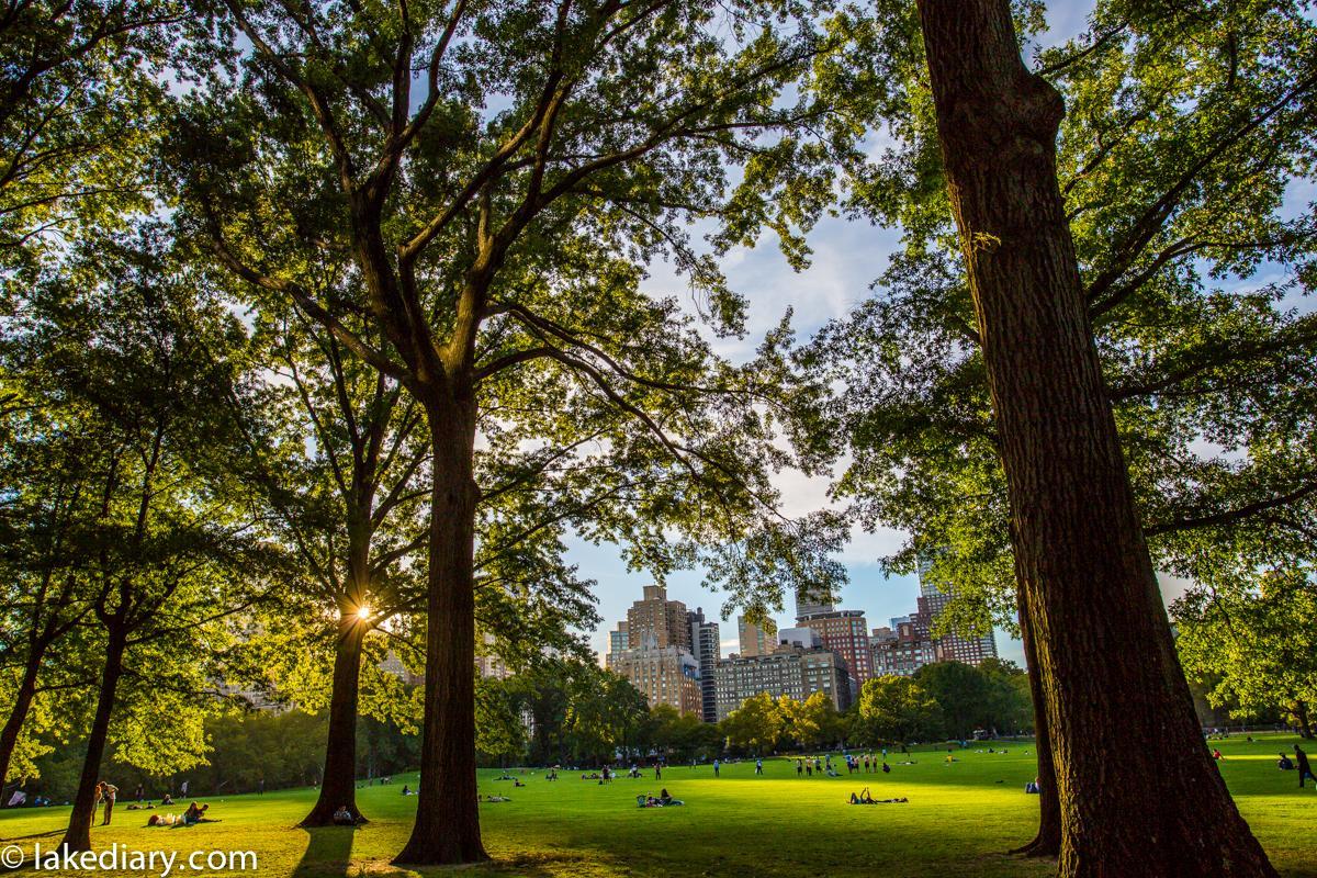 central park new york-10
