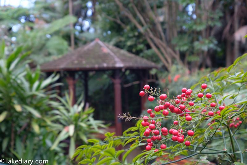 Sydney Camellia gardens-4
