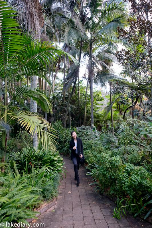 Sydney Camellia gardens-8