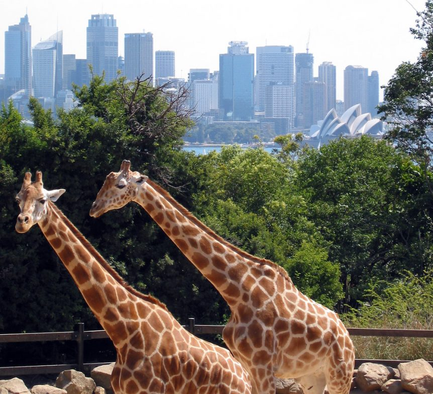 Sydney_taronga_zoo