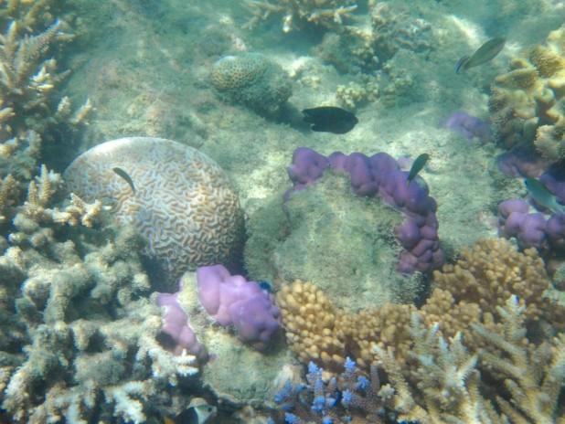 snorkelling - Great Barrier Reef